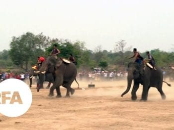 Buon Don Elephant Races Vietnam