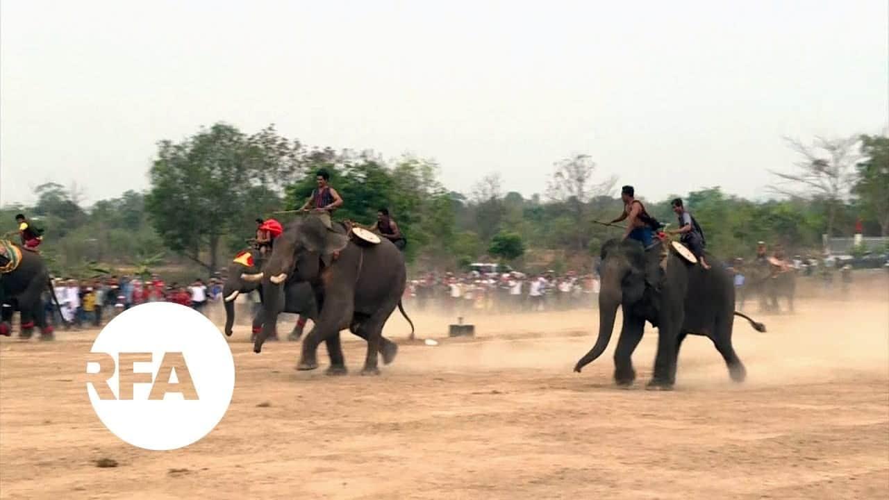 Buon Don Elephant Races Vietnam