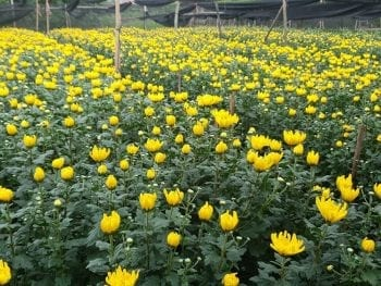 Tay Tuu Flower Garden in Hanoi