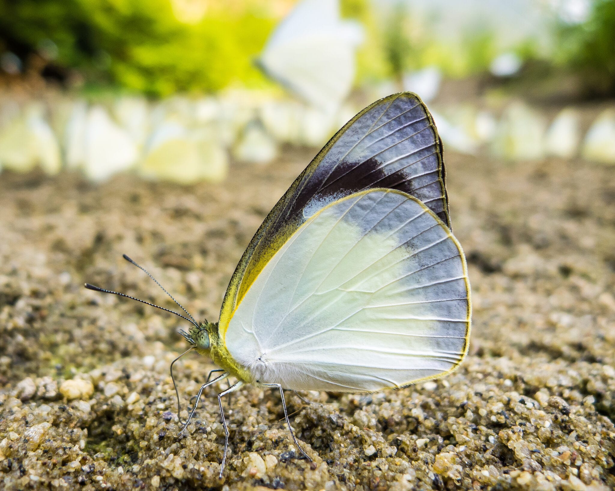 Image of a butterfly in Ba Bê National Park in Vietnam
