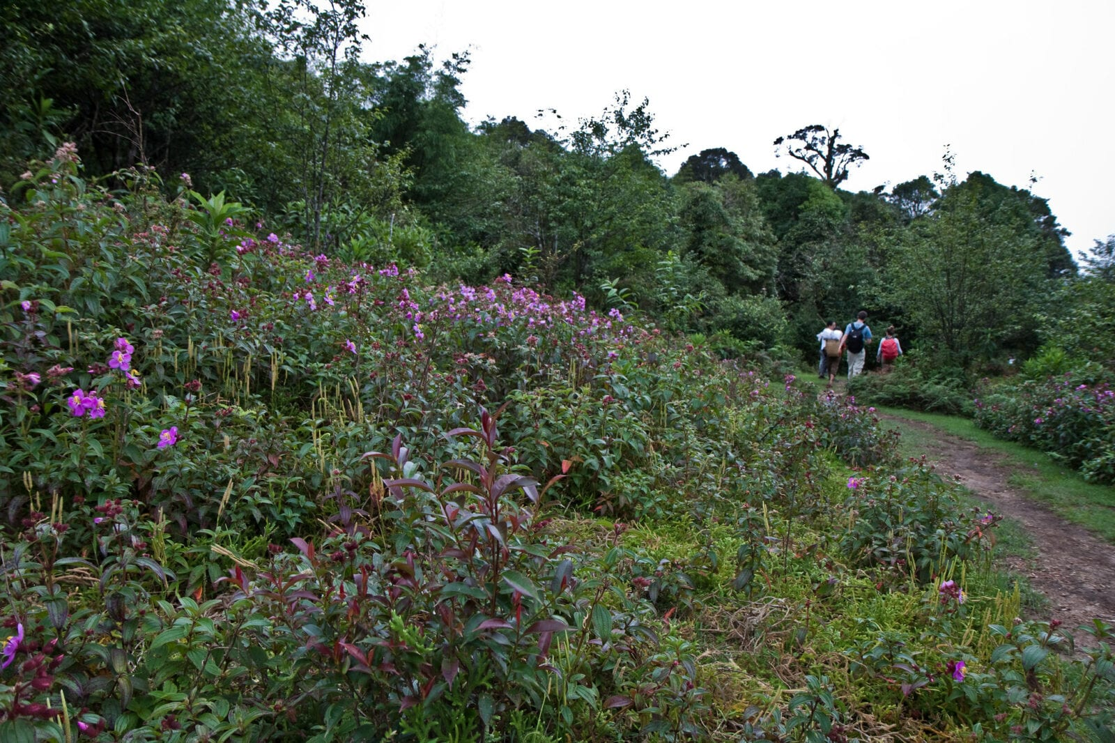 Image of the flora within the Hoang Lien National Park on a hike up Fansipan