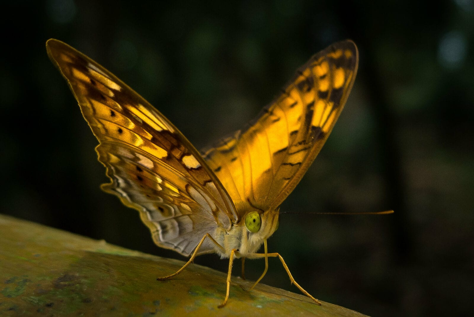 Image of a butterfly at Ba Vi National Park in Vietnam