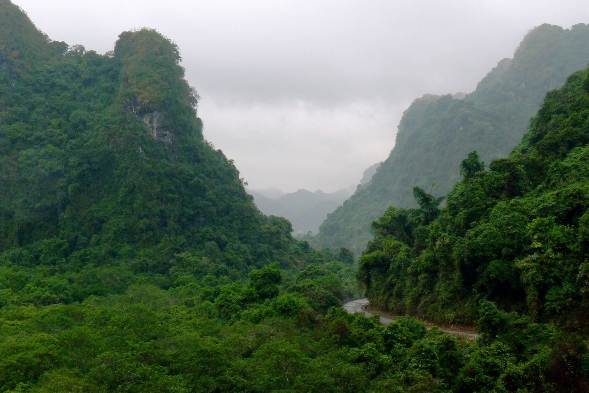 Jungle View in Cat Ba National Park Vietnam