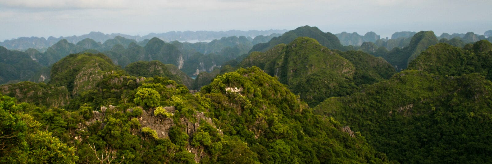 Image of lush green mountains in Tam Dao National Park in Vietnam