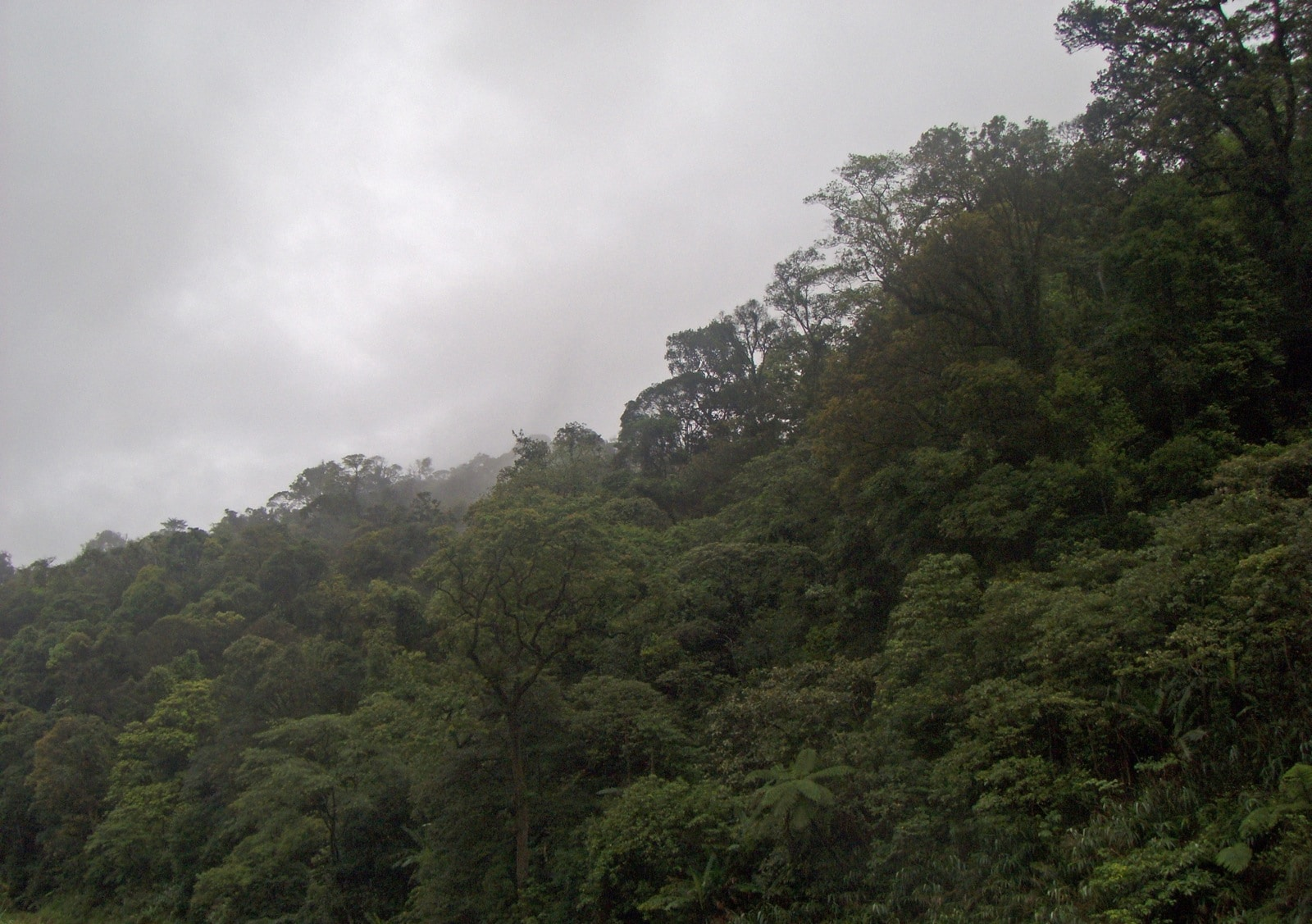Forest in the Annamite Range Vu Quang Vietnam