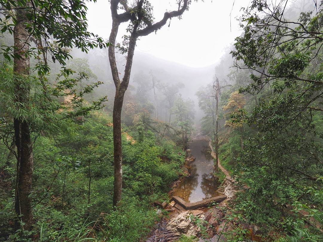 Forest in Hoàng Liên National Park Vietnam