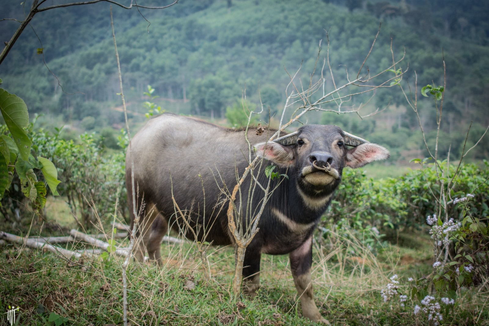 Image of a wild animal in the Pu Mat National Park in Vietnam