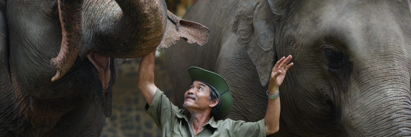 Image of a zookeeper with elephants at the Saigon Zoo and Botanical Garden in HCMC, Vietnam