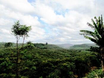 Image of green scenery in Bu Gia Map National Park in Vietnam