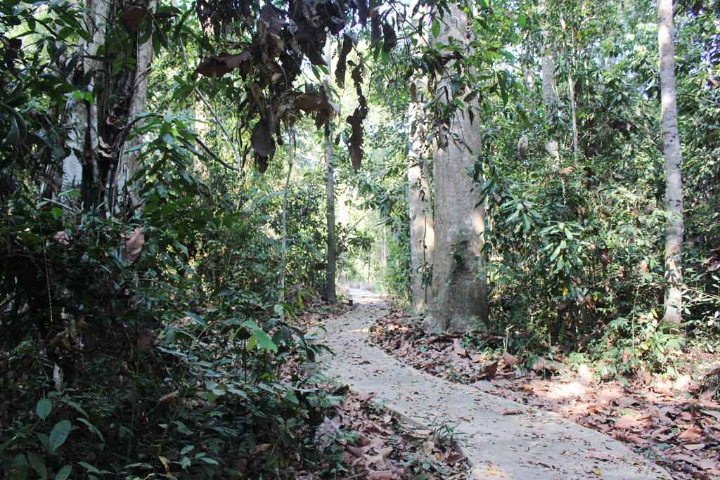 Image of a trail in Lo Go Xa Mat National Park in Vietnam