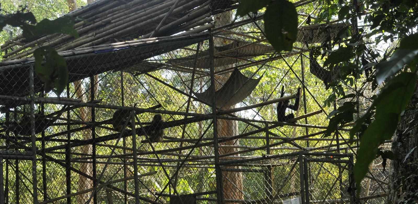 Primate Rehabilitation Center at Cat Tien National Park Vietnam