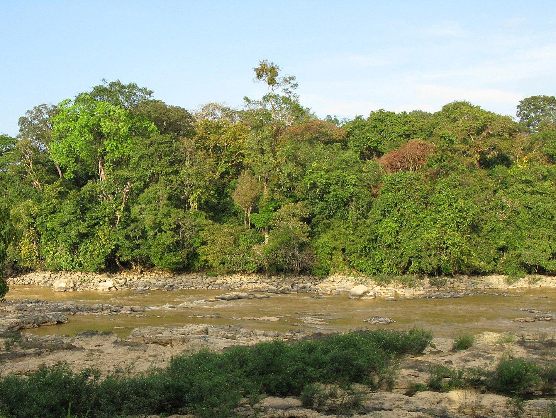 River in Cát Tiên National Park Vietnam