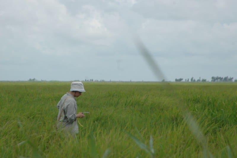 Wetlands in Tram Chim National Park Vietnam