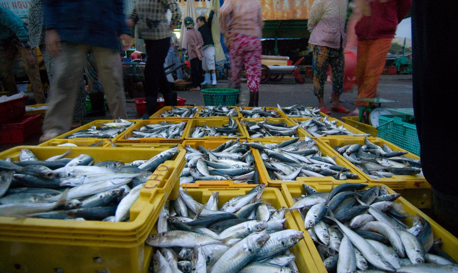 Image of fish in buckets at the Phan Thiet Fish Market in Vietnam