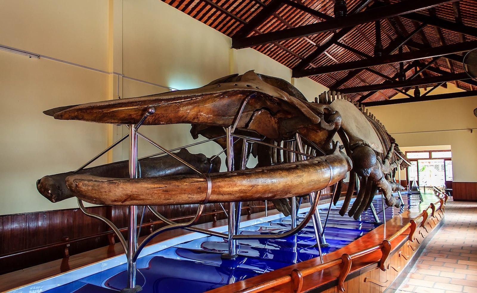 Image of a whale skeleton in Van Thuy Tu Temple in Phan Thiet, Vietnam