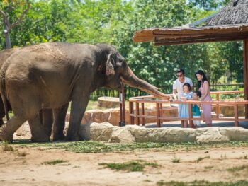 Image of a family feeding elephants at the VinWonders Nam Hoi An in Vietnam