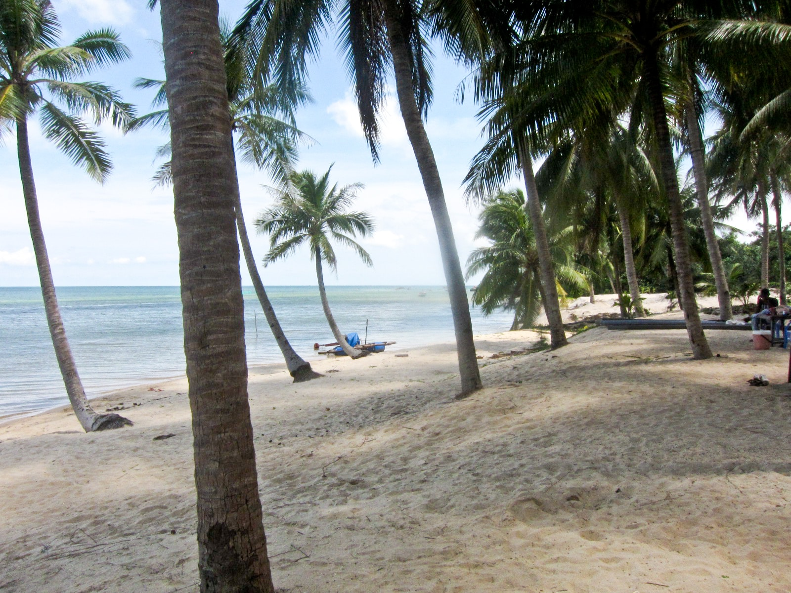 Palm Lined Beach in Phu Quoc Vietnam