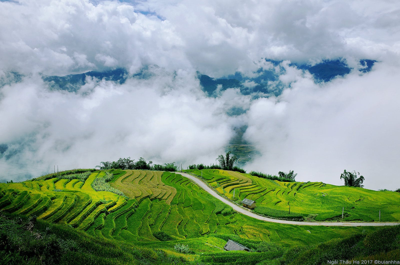 Image of rice paddy fields in Lao Cai, Vietnam