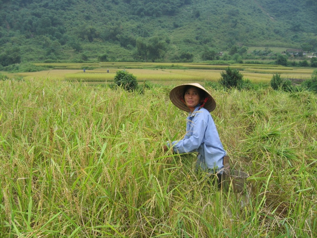 Local Agricultural Field in Nghe An Province, Vietnam